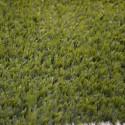 Искусственная трава LuxGrass 20 Искусственный газон (ЛюксГрасс) 20