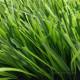 Искусственный газон для футбола 60мм биколор